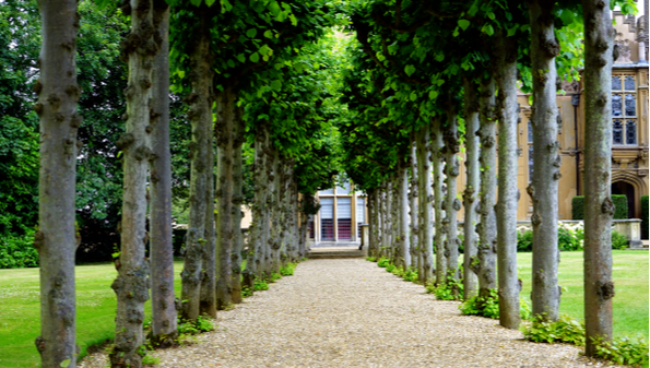 Picture of a driveway of gravel where trees are used to mark the boundary