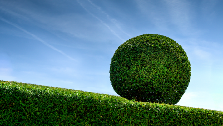 Picture of a neat cut headge where you can see a sphere hedge above it